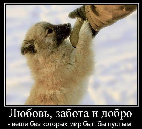 добро, забота, помощь людям и животным, НЛП метопрограмма ориентация на других,