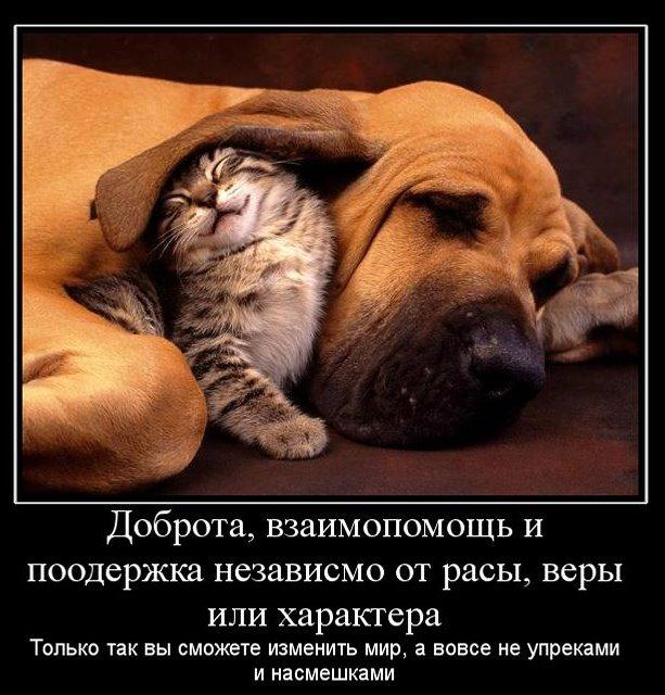 собака и кошка дружат, забота о других, Выиграл - Выиграл модель, НЛП,