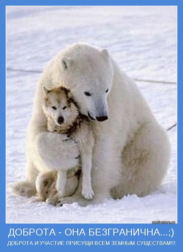 Доброта к людям, доброта к животным, быть добрым, добрые поступки,