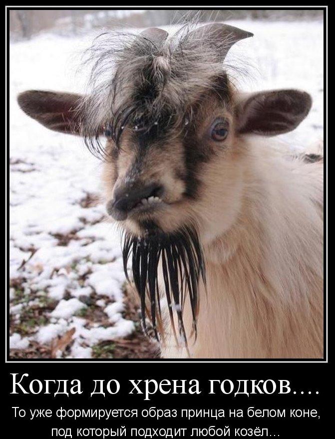 все мужики козлы, ищу принца на белом коне, любовь зла полюбишь козла,