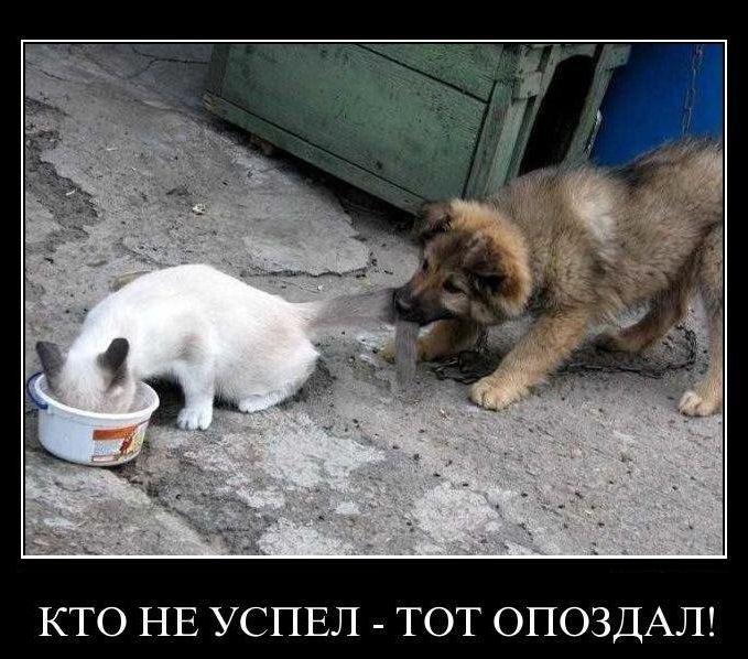 Ответственность за опоздания, успешные люди приходят вовремя, кот и собака,