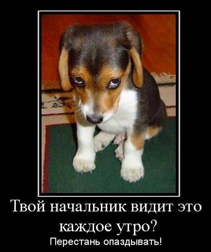 виноватый вид, прекрати опаздывать, наказание за опоздания, виноватый щенок,